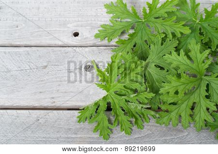 SCENTED GERANIUMS leaves natural mosquitoes repellent on a wooden table