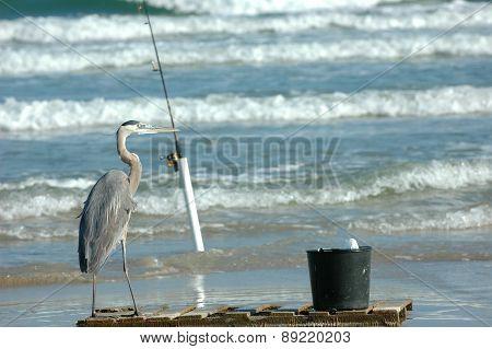 A Bird's Gotta Eat