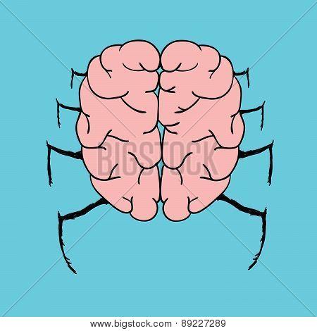 Spider Brain