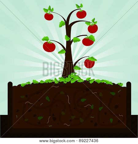 Tomato Tree And Compost