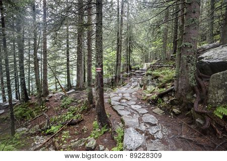 Mountain trail through forest in Tatry, Poland.