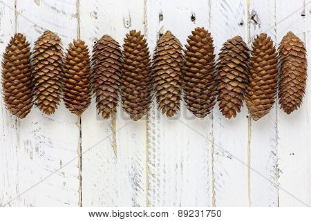 Natural Brown Pine Cones Line White Background