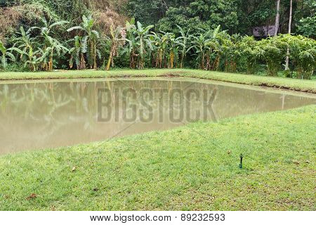 The Pond With The Banana Tree At Waterside