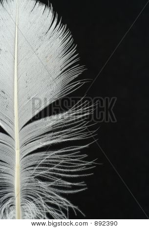 Feather Details On Black