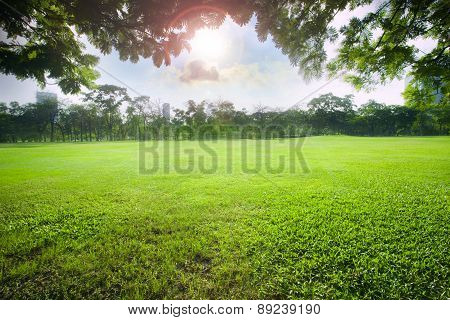 Sun Light Over Sky In Beautiful Green Grass Field Of Public Park