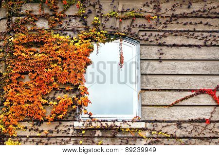 Autumnal leaves on the wall