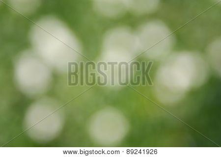Bokeh White And Green