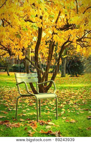 Public chair in an autumn park