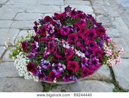 Flowers in a flowerpot.