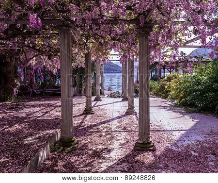 Beautiful front yard with pillars and wisteria flowers