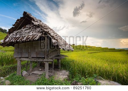 Cottage At A Cornfield