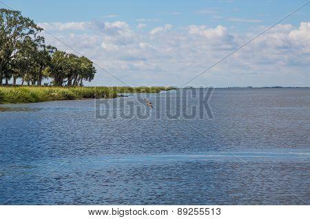 Pelican Crusing Over Blue Water In Bay