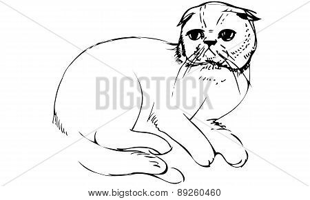 Vector Sketch Of A Cat Sittingk