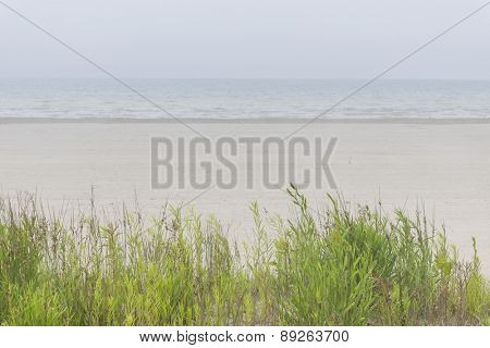 Empty sandy beach in fog with green grass