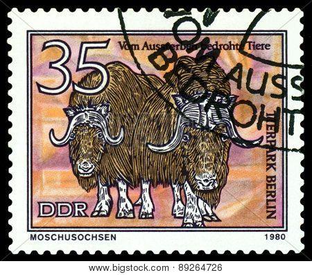 Vintage  Postage Stamp.  Musk  Oxen.