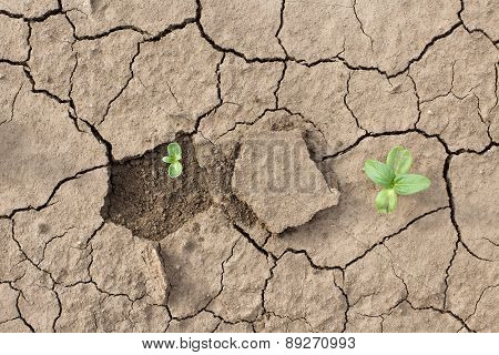 Young Plants In Dried Soil