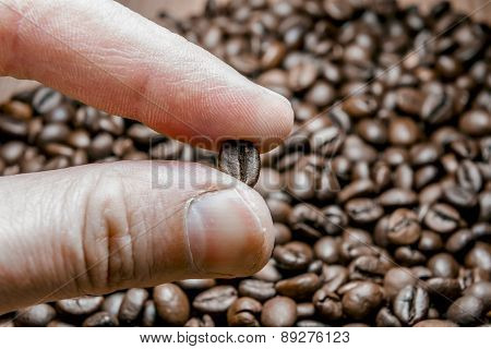 Fingers Keep Roasted Coffee Bean. Macro Close Up