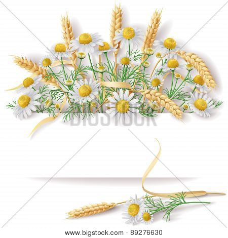 Banner With Wild Chamomile  And Wheat Ears Bunch.