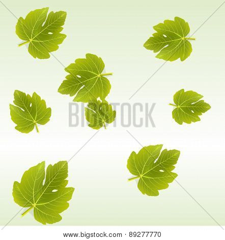 Fig Leaves Background