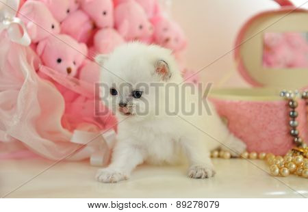 Funny very little  British kitten in a pink atmosphere
