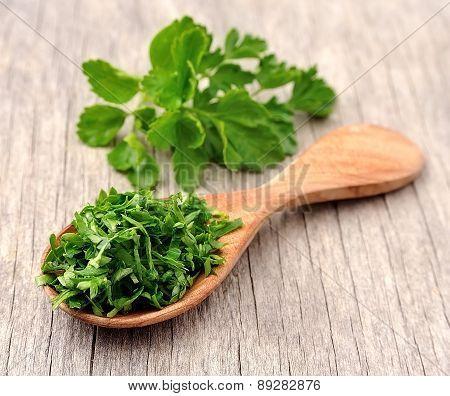 Fresh Parsley Herbs