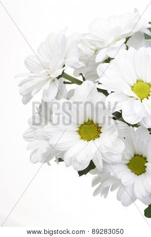 White bunch of flowers