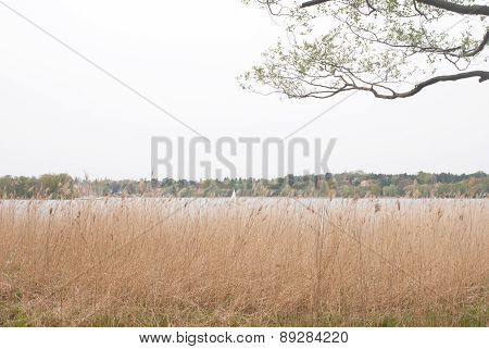 Grass, lake and tree branch