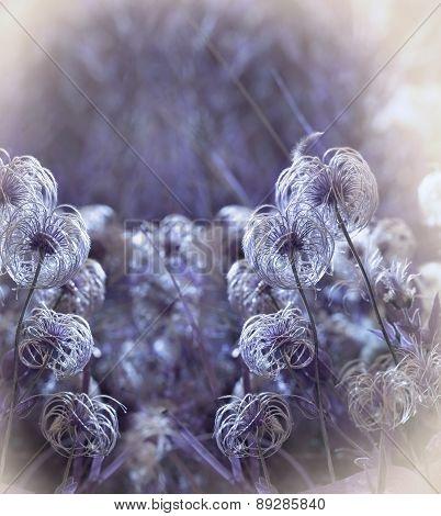 Softness flower - fluffy flower