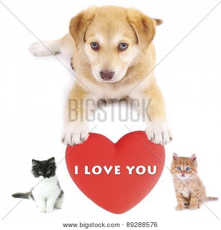 Cute pets with big heart isolated on white