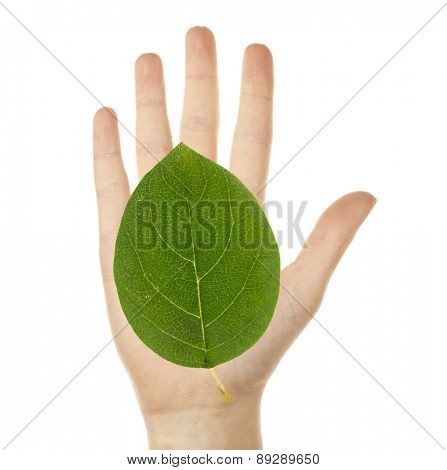 Female hand with green leaf isolated on white