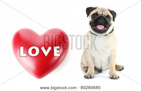 Cute dog and big heart isolated on white