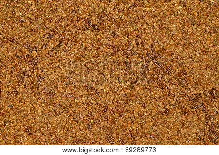 Linseed, Detail, horizontal
