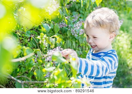 Happy Toddler Boy Plucks Flowers
