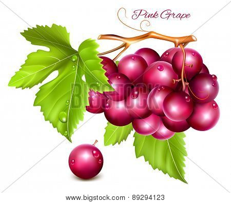 Grape cluster with green leaves. Vector illustration.