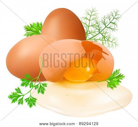 Raw eggs and  broken egg with herbs. Vector illustration
