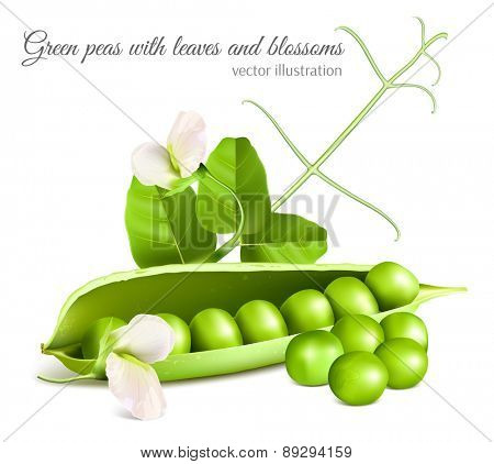 Green peas with leaves and blossom. Vector illustration