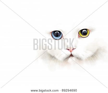 Animal collection: portrait of a white cat with different colored eyes, on a white background, water