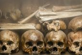 stock photo of skull bones  - The old grunge human bones and skulls - JPG