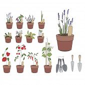 pic of plant pot  - Flower pots with herbs and vegetables - JPG