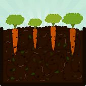 pic of microorganisms  - Planting carrots - JPG
