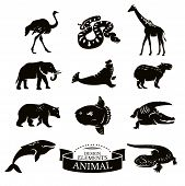 image of anaconda  - Set of different animal icons vector illustration - JPG