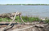 pic of driftwood  - A thick abandoned rope hangs over driftwood on the shores of the mighty Mississippi River as a barge goes by along the distant shore - JPG