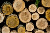 stock photo of woodstock  - Background of cut wood logs stacked in a pile - JPG