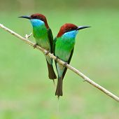 pic of throat  - Couple of Blue - JPG