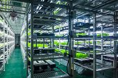 foto of hydroponics  - Plants are cultivated in hydroponic system - JPG