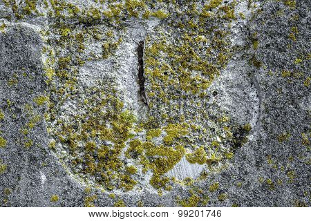Algae and Mold On A damaged concrete wall.