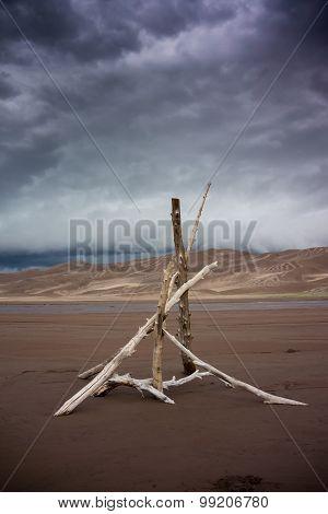 Desert Woodpile