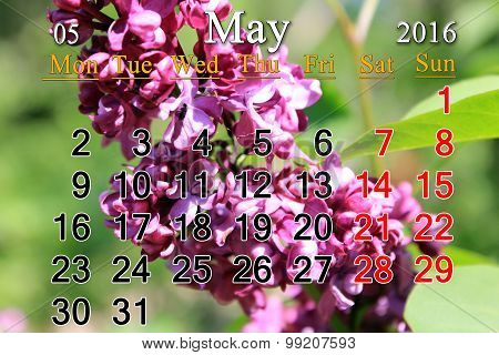Calendar For May Of 2016 With Lilac Bush