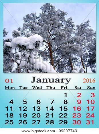 Calendar For January 2016 With Pine Snowy Branches