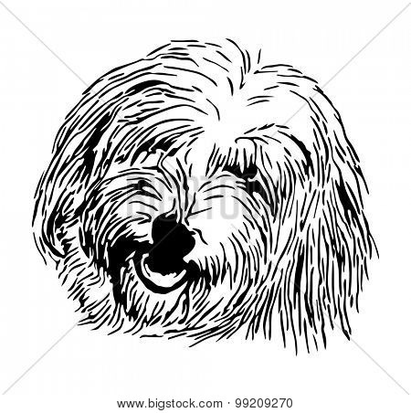 vector - rare dog - head Coton de Tulear - isolated on background